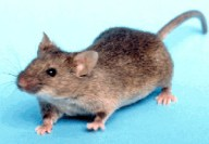 Een muis in mijn huis!